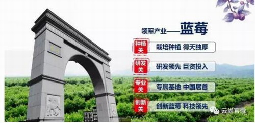 吉林云尚,中国蓝莓产业领导者